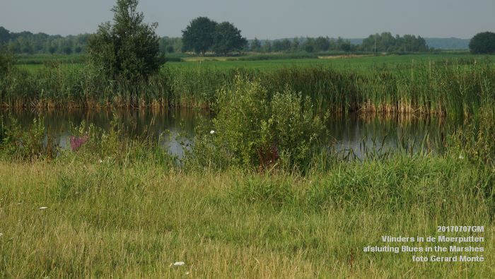 DSC07426- Vlinders in de Moerputten - afsluiting LIFE+-project Blues in the Marshes - 7juli2017 - foto GerardMontE