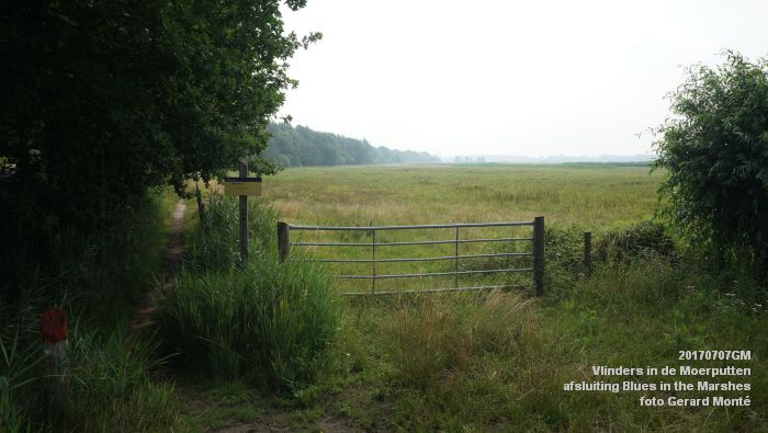 DSC07454- Vlinders in de Moerputten - afsluiting LIFE+-project Blues in the Marshes - 7juli2017 - foto GerardMontE