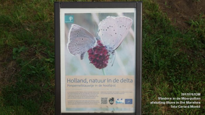 DSC07459- Vlinders in de Moerputten - afsluiting LIFE+-project Blues in the Marshes - 7juli2017 - foto GerardMontE