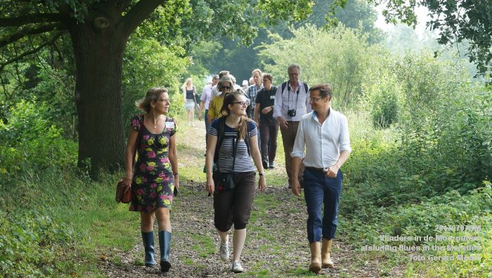 DSC07475- Vlinders in de Moerputten - afsluiting LIFE+-project Blues in the Marshes - 7juli2017 - foto GerardMontE