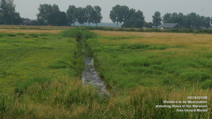 DSC07481- Vlinders in de Moerputten - afsluiting LIFE+-project Blues in the Marshes - 7juli2017 - foto GerardMontE