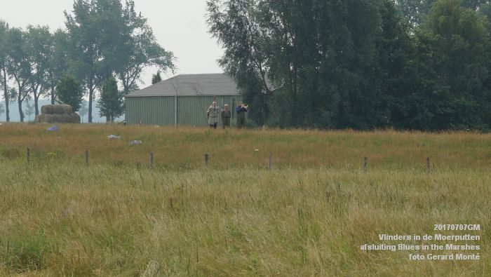 DSC07515- Vlinders in de Moerputten - afsluiting LIFE+-project Blues in the Marshes - 7juli2017 - foto GerardMontE