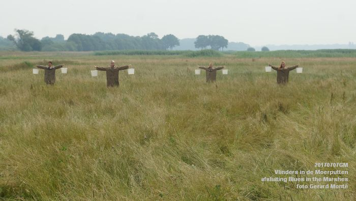 DSC07522- Vlinders in de Moerputten - afsluiting LIFE+-project Blues in the Marshes - 7juli2017 - foto GerardMontE