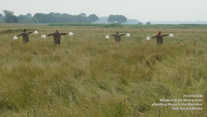 DSC07525- Vlinders in de Moerputten - afsluiting LIFE+-project Blues in the Marshes - 7juli2017 - foto GerardMontE