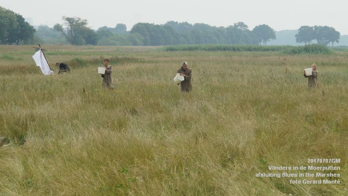 DSC07529- Vlinders in de Moerputten - afsluiting LIFE+-project Blues in the Marshes - 7juli2017 - foto GerardMontE