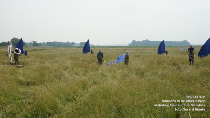 DSC07557- Vlinders in de Moerputten - afsluiting LIFE+-project Blues in the Marshes - 7juli2017 - foto GerardMontE